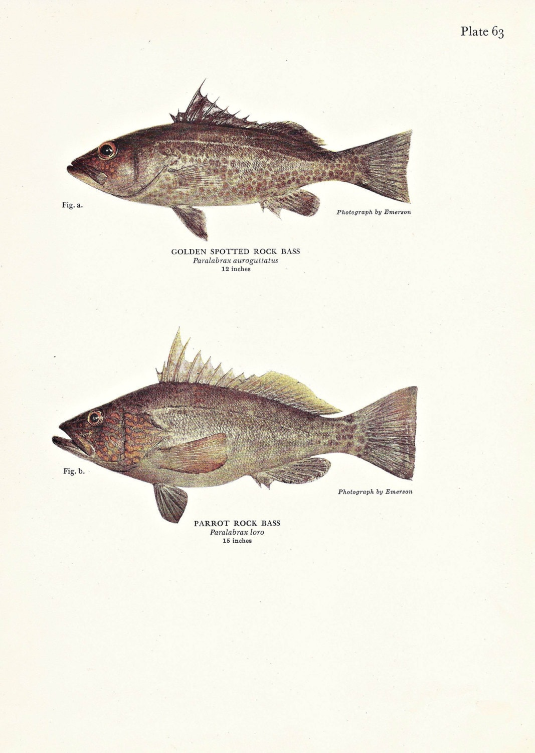 Fish print bass beach decor fishing masculine home decor for Your inner fish sparknotes