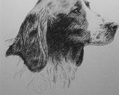 1935 Welsh springer SPANIEL DOG Vintage original C Francis Wardle bookplate dog print  Unique rare gift