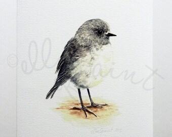 Toutouwai - a native New Zealand robin giclee print