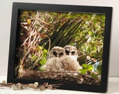 baby animal photography, nature photography, owls photo, 3 sizes available