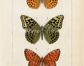 Orange and Green Butterfly Vintage Book Plate - Instant Digital Download D302
