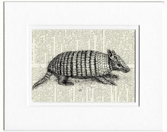 armadillo dictionary print