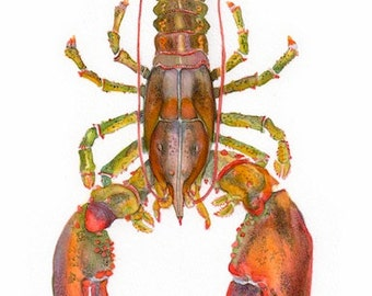 """ART """"You are my Lobster"""" Lobster watercolor, print from original painting, kitchen art, food painting, from the sea, beach art"""