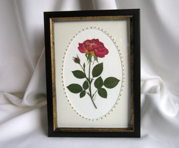 Pressed Flower Art Real Rose In 5x7 Inch Black Picture Frame