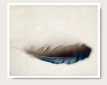 Feather photo, feather photography, nature photo, nature print, nature photography, blue jay feather, feather photography, feather art print