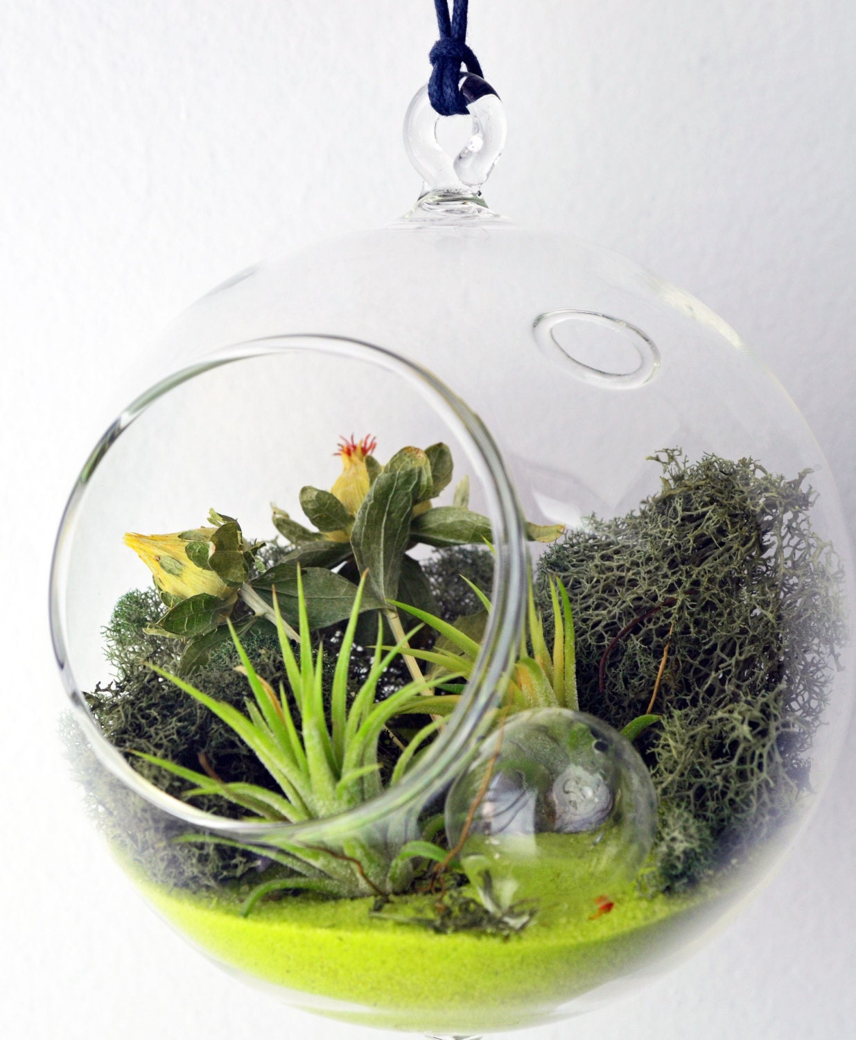 Air Plant Terrarium Hanging Glass Orb By PinkSerissa