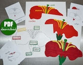 DIGITAL Printable PDF Download to make Montessori Botany Felt Parts of the Flower, Leaf, Tree Puzzles and Nomenclature 3 Part Cards