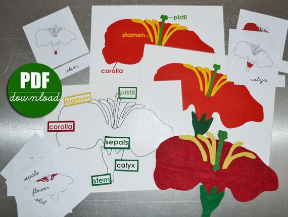 Digital printable pdf download to make montessori botany felt digital printable pdf download to make montessori botany felt parts of the flower leaf tree puzzles and nomenclature 3 part cards publicscrutiny Choice Image
