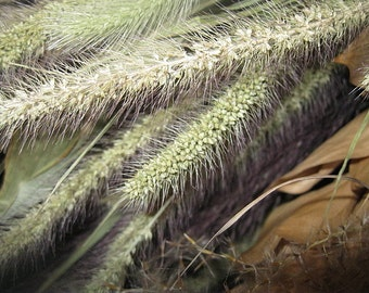 MIXED GRASSES naturally DRiED FLOWER Bunches