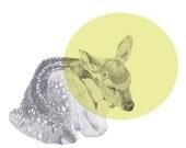 sleeping deer print 8x10