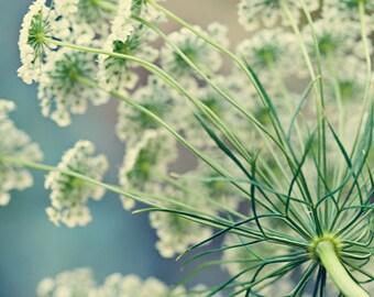 Floral Fine Art Photograph, Queen's Anne Lace Photo, Macro Print, Bedroom Art, Garden, Sage, Teal Blue, White, Shabby Chic Art, Print