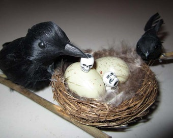 AlteRed aRt EdGaR A PoEs The Raven BiRd NeSt BaBy fEEd ME SkUll OOAK DeCoR