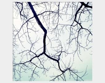 Winter Tree Branches, Mint Green Wall Art, Winter Photograph, Mint Green Sky Art, Mint Black Decor, Bare Tree Branches, Dreamy Photohgraph