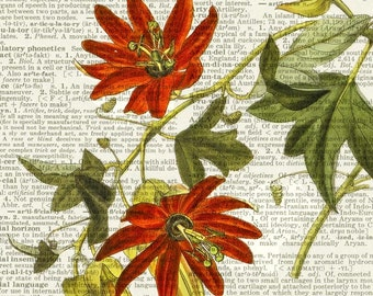 passion flower dictionary page print