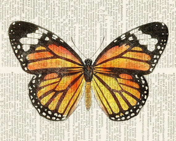 Unforgettable image for printable butterfly pictures