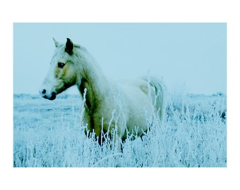 Fine Art Photography Equine Winter Landscape