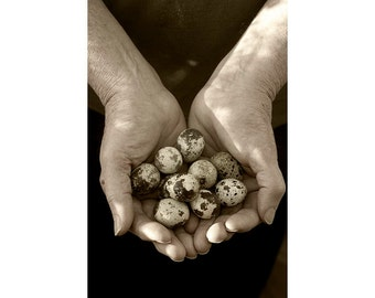 Still Life Photography, Man's Hands with Quail Eggs, Sepia Photography, Fine Art Print, Zen Art, Rustic Wall Decor