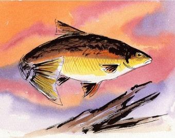 Original Fish Watercolor : Golden Shiner