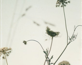 Nature photography, Queen Annes Lace photo, pale blue botanical photo, spring, summer, shabby chic decor,wild flowers - Summer Lace
