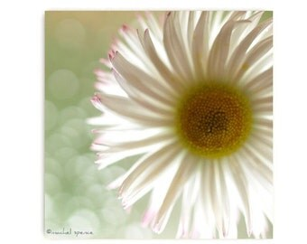 Daisy Photograph Affordable Home Photography Prints Nature Photography Nature Lover Woodland Scene Flower