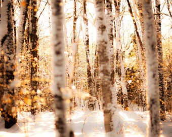 Winter photography, snowy forest, glitter, fairytale, nursery decor,  sparkle, honey gold, ice, snow, bokeh, silver, snowshoes