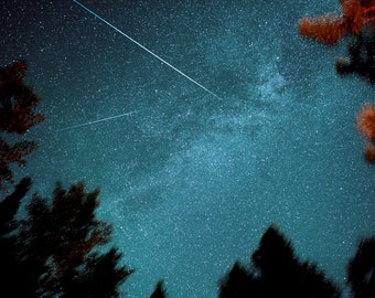 Star photography, constellations, zodiac, meteor, astrology, horoscope, summer sky, milky way, pine trees, starry night