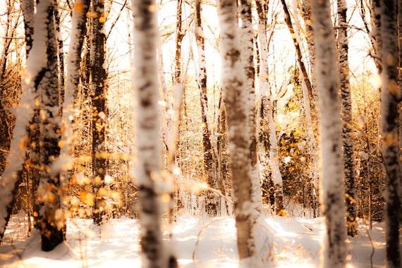Winter photography, snowy forest, glitter, fairytale, nursery decor,  sparkle, honey gold, ice, snow, bokeh, silver, snowshoes
