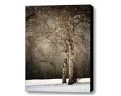birch tree landscape photography  Fine Art Photograph canvas gallery wrap office decor home decor