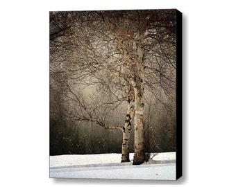 birch tree landscape photography  Fine Art Photograph canvas gallery wrap office decor home decor
