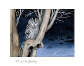 Tawny owl with shooting star print
