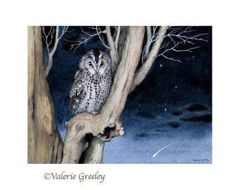 Tawny owl with shooting star print