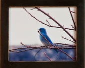 Mountain Blue Bird, the most popular photograph we offer as seen on many treasuries, Original Wildlife Photography