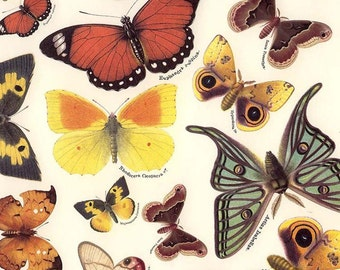 Made In Italy Authentic Florentine Paper For Your Projects Butterflies