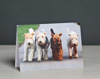 Four Terriers Greeting Card, Fox Terrier, Welsh Terrier, Dogs