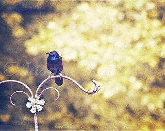 A Little Black Bird. 8x12 Fine Art Print