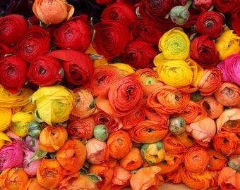 Flower Photography, Romantic Ranunculus For Sale in Paris, Paris Photography red, nature photography, orange - yellow - pink - flower decor
