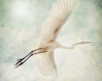 White Flight - Bird in Flight - Nature Photography - 8x8 Fine Art Print - Egret