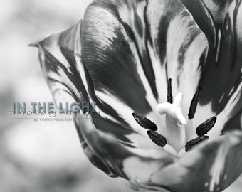 Tulip Macro in Black & White - Fine Art Photography