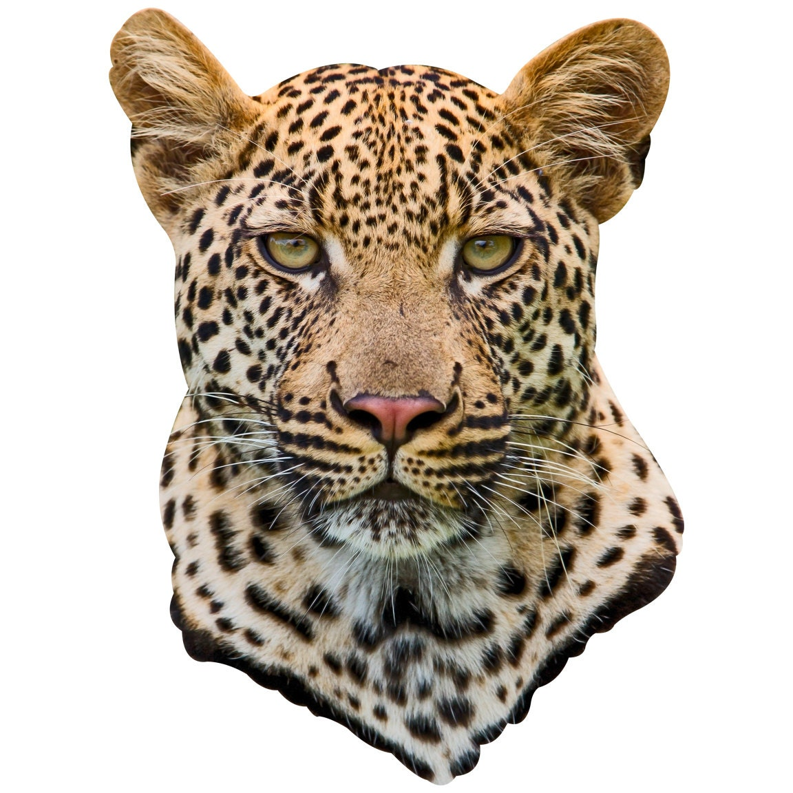 Leopard head adhesive taxidermy - Image leopard a imprimer ...