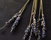 Rustic still life purple dried flowers home decor shabby chic dark botanical art - Lavender 8 x 10