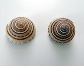 Seashell Magnets - set of 6