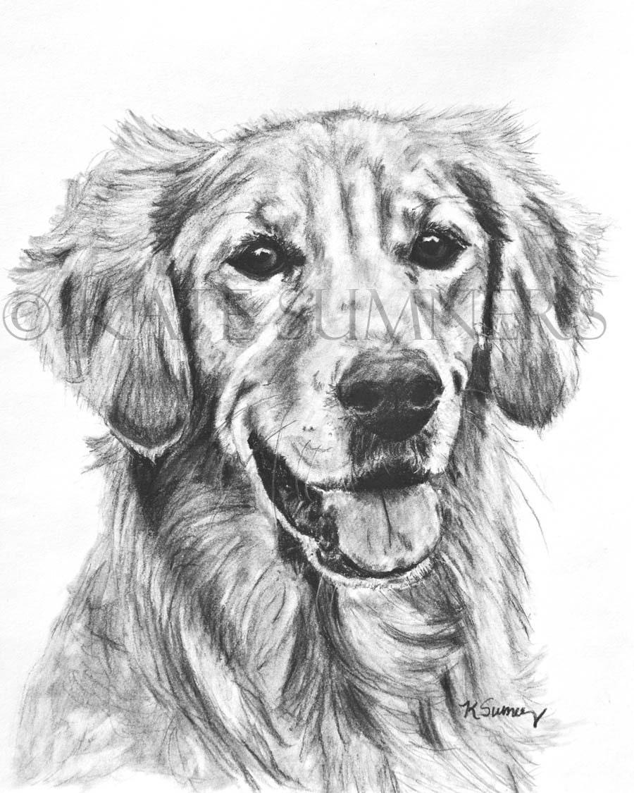 Golden retriever arte stampa d 39 arte di disegno cane 8 x 10 - Dessin golden retriever ...