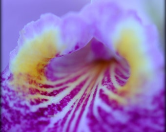 ACEO macro photo of orchid - Tunnel of Love