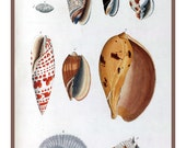 A photo reproduction of a vintage science print greeting card