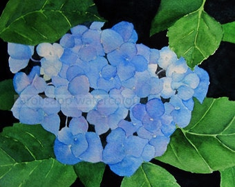 blue hydrangea watercolor  painting