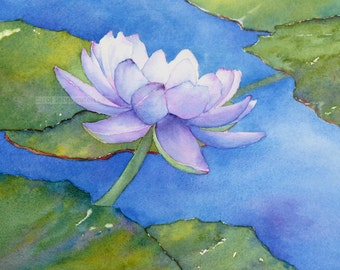 purple water lily watercolor painting archival print