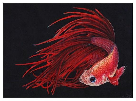fire betta fish