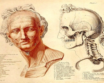 Anatomy / medical print  greek face  steam punk skull anthropology