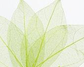 Green Leaves, Card Scrapbook Embellishment
