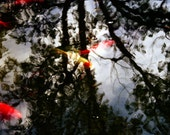 Koi With Dream Trees - Fine Art Photography Print by Little Big Photography